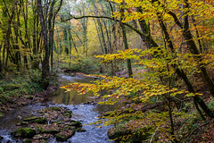 Autumn atmosphere (FVillalpando) Tags: forest river autumn water trees yellow landscape ngysa nature