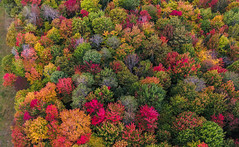 Hints of color in autumn (LEXPIX_) Tags: autumn fall foliage colors trees leaves orange red aerial new england nek dji inspire2 x5s micro 43 lexpix