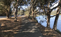 #LakeMerced #Walk on a #beautiful #windy day #Saturday #September 28, 2019 in #SanFrancisco (Σταύρος) Tags: sanfrancisco lakemerced walk beautiful windy saturday september freshwaterlake tpc hardingpark park lm pacificrowingclub lagunadenuestraseñoradelamerced laguna rowingclub westlakevillage lakeshore parkmerced tpchardingpark 1963 sf city sfist thecity санфранциско sãofrancisco saofrancisco サンフランシスコ 샌프란시스코 聖弗朗西斯科 norcal سانفرانسيسكو flora fauna trees bushes shurbs leaves cold sunnyday lake 湖 meer lac see λίμνη 호수 innsjø озеро sjö llyn echi cali