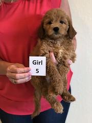 Girl 5
