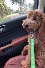 Ginger's adorable Parker