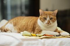 #summilux 75 #M10D (jomocovi) Tags: summilux m10d cats gatos