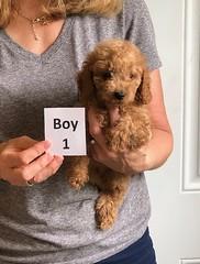 Lola's boy 1