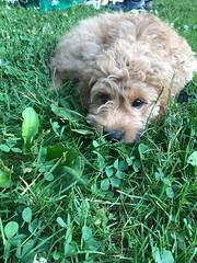 Sabrina's Murphy loves his new yard