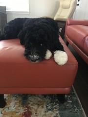 Josie's sweet boy Elmo!