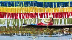 _SSS1870 (Bugphai ;-)) Tags: colorful vibrant blue red wallpaper color colour green art yellow background burma line cotton inle burmese cottonworkshop design dried dye dyeing dyed dyes light lake fashion lotus market handmade made fabric handcrafted myanmar fibers fabrics travel sunlight travelling vintage pattern natural traditional shelf textile workshop process shanstate shrinkage riverhouse travelmyanmar