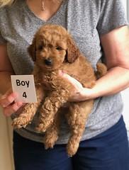 Lola's boy 4