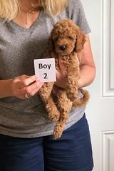 Lola's boy 2