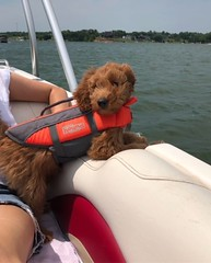 Maggie Mae's Hazel loving the boat life!