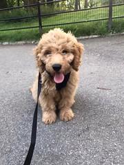Sabrina's Murphy loves the city life!