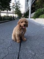 Sabrina's Murphy is a city boy now!