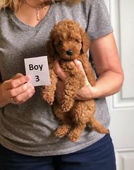 Lola's boy 3