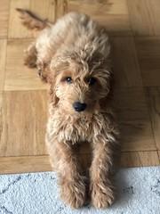 Sabrina's adorable Murphy