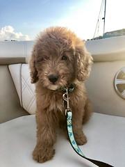 Sophie's beautiful Brinner!