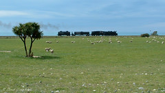 007 15Oct04 near Clarence 2 (Awesome Image Maker NZ) Tags: 2004 flickr jb1236 marlborough steamexcursion steamtrain