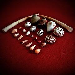 Mini Shells (Giorgio Ghezzi) Tags: macromondays knolling shell conchiglia