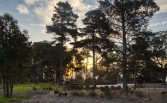 Campground & Morning Sun Through the Trees (marlin harms) Tags: morrobaystatepark sunrise