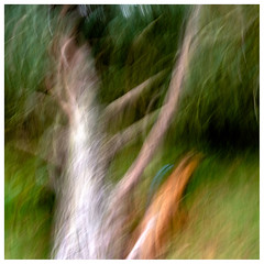 ICM fallen one , Findatie (wwshack) Tags: icm intentionalcameramovement kinross lochleven lochlevenheritagetrail scotland treeabstracts trees