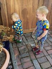 Being gentle with flowers (quinn.anya) Tags: eliza paul preschooler toddler flowers