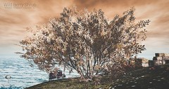 Little Branch Wild Berry Shrub (the.littlebranch) Tags: littlebranch lb homegarden landscaping secondlife sllandscaping trees sl animated landscape garden forest leaf seasons spring summer autumn winter neo japan shrub shrubs wildberryshrub
