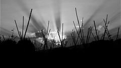 Lines (montseny visions) Tags: catalonia catalunya nature naturephotography palautordera natural naturalworld naturephoto earth landscape ciel clouds cel outdoor field light montseny ngysa sun sunset sky outside bw blackwhite blackandwhite ngysaex