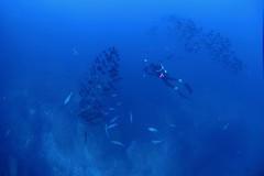 Plongée à Soccoro (michel David photography) Tags: diver plongée socorro mexique