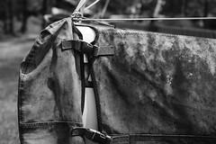 Yacht, Discovery Bay, Hong Kong. by Leica M10-D, Leica Summicron 50mm F/2 Rigid (duncanwong) Tags: boat sea seashore beach yacht kong hong lantau bay discovery rigid thread ltm mount m f2 2 50mm summicron m10d leica