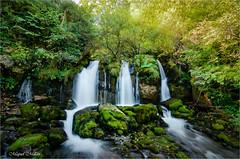 L'Adou del Bastareny (Miquel Millán) Tags: cataracta catarata waterfall catalunya cataluña catalonia nikon d5100 long exposition llarga exposició larga exposición bosc bosque forest