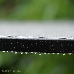 Rain (Ineke Klaassen) Tags: rain raining outdoor garden regen nat wet tuin weer weather weatherphoto weerfoto green groen sony sonya6000 sonyimages sonyalpha sonyalpha6000 sonyilce6000 sonyfe2870200gmoss macro macrophotography nature natuur raindrops regendruppels 2550fav 25favs 25fav 25faves 30favs 30fav 30faves vert 35fav 35favs 35faves 500views 600views