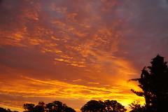 the last sunrise this September - explored (quietpurplehaze07) Tags: september2019 sunrise september silhouettes orange yellow cloudscape