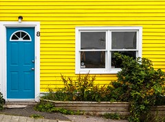 Bright Yellow House (Karen_Chappell) Tags: yellow house home door blue window white trim wood wooden paint painted greenery plants city urban nfld newfoundland stjohns jellybeanrow architecture building rowhouse clapboard downtown canada atlanticcanada avalonpeninsula eastcoast canonef24105mmf4lisusm color colour colours colors colourful multicoloured