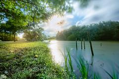 LRM_EXPORT_905357445859801_20190930_170342423 (冷 心) Tags: taiwan d7500 nikon 濕地