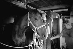 Horse (Robycrux) Tags: horse stable stall shed byre stalla circolo ippico cisi imola