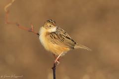 Beccamoschino (Simone Mazzoccoli) Tags: nature natura bird birds birdwatching ornithology animal animals wildlife wild bokeh colors winter wilderness