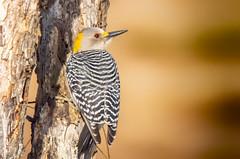 Wild Birds 21 (Largeguy1) Tags: approved nature wild bird macro canon 5d mark iii