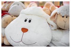 Big smile and little sheep (leo.roos) Tags: bokeh wit speel solaag cuddly schaapjes zacht knuffel littlesheep cuddletoy cosina a7 cv voigt mmount darosa voigtlander3514 nokton3514 leoroos voigtlandernoktonclassicsc35mmf14vm