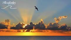 Envol (Stitchoux) Tags: summer sky sun mer bird love beach nature beautiful clouds landscape like plage morning macro photography nikon oiseau soleil horizon nuages sunset sunrise nice paca sunshine explore paysage