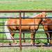 2019 - Road Trip - 84 - Livingston - 9 - Hwy 540 Horses