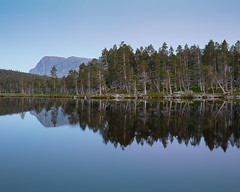 Stora Sjöfallet Nationalpark VI (Gustaf_E) Tags: forest jokkmokk kväll landscape landskap laponia lappland nationalpark norrland skog sommar storasjöfallet storasjöfalletnationalpark sverige sweden urskog woods