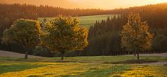 Das goldene Licht der Herbstsonne (Mariandl48) Tags: goldeneslicht herbstsonne herbststimmung lichtdurchflutet bäume sonne landschaft sonnenaufgang sommersgut wenigzell steiermark austriag