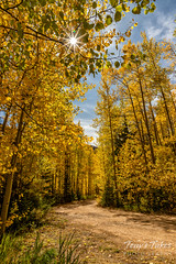 September 26, 2019 - Gorgeous fall colors on Guanella Pass. (Tony's Takes)