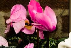 Fiore Da Giardino (federicoloforte) Tags: fiore piante plant flower garden giardino bw hdr highdynamicrange altagammadinamica