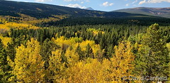 September 29, 2019 - Fall foliage along the Peak to Peak Highway. (David Canfield)