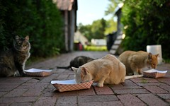 lunchtime (l i v e l t r a) Tags: f18 cats lunch eating meal hungry food wisconsin nelson creamery