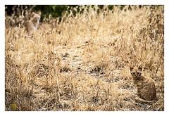 camuflaje / camouflage 2 cats (Luis kBAU) Tags: