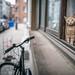Small kitten in the window - Us By Night // Antwerpen