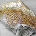 Goniopholis sp. (fossil crocodilian scales) (Morrison Formation, Upper Jurassic; Dinosaur National Monument, Utah, USA)