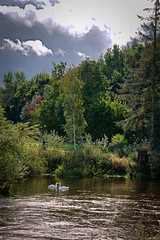 Swani River! (vincocamm) Tags: eden river rivereden culgaith cumbria water trees clouds sun sunny swans green red orange woods forest autumn september nikon d5500
