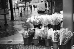 Stadt (tiltdesign2016) Tags: yashicaelectro35gsn analogphotography bw wuppertal elberfeld kodakd7611 plustekopticfilm7600ise kodaktrix400 stadt strase street gruppe blumen flowers