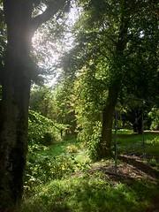 An Unexpected Day (keibr) Tags: autumn blip blipfoto fall keibr lasse leaves sun sundsvall sunlight trees